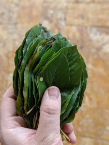 30 Fresh Kratom Leaf