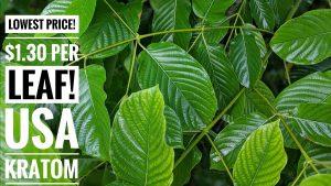 Fresh Kratom Leaf Banner