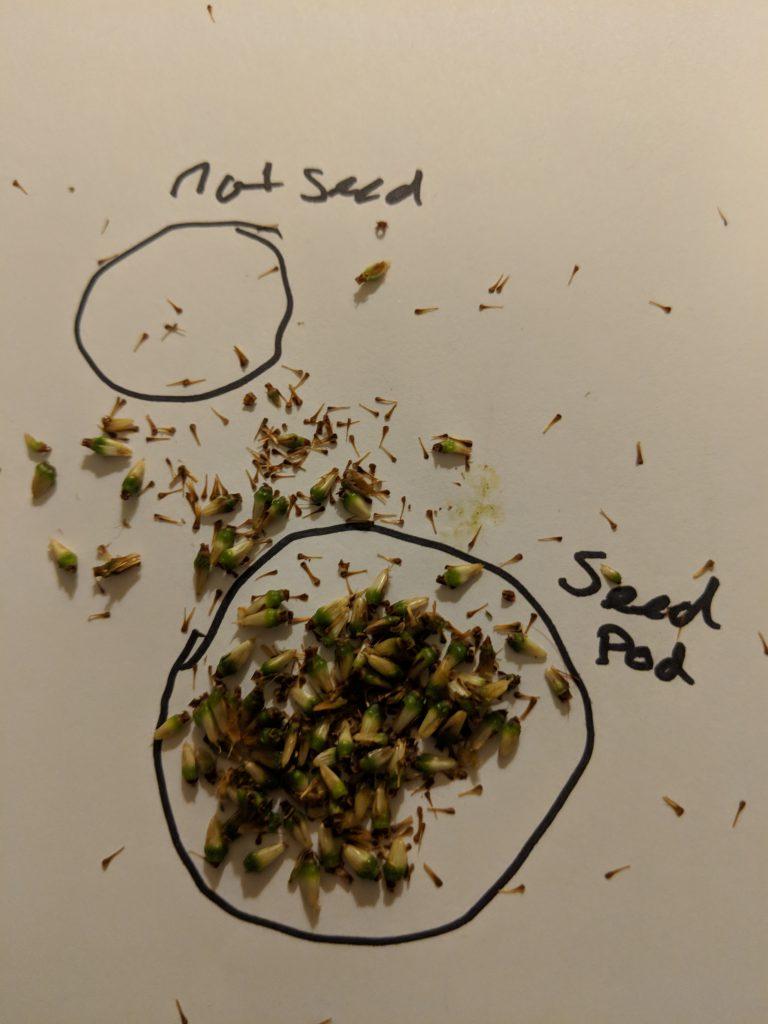 Kratom Pod Seed Breakdown